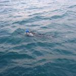 Olandų atletas jau antrą kartą perplaukė Anglijos kanalą