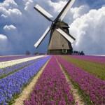 Pirma kelionė į Olandiją: ką reikia žinoti vykstant į šią šalį?