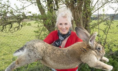 Worlds biggest rabbit stolen