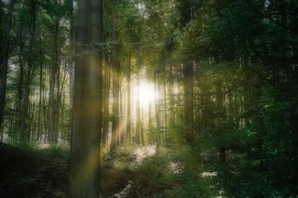 Im Wald des Fauns