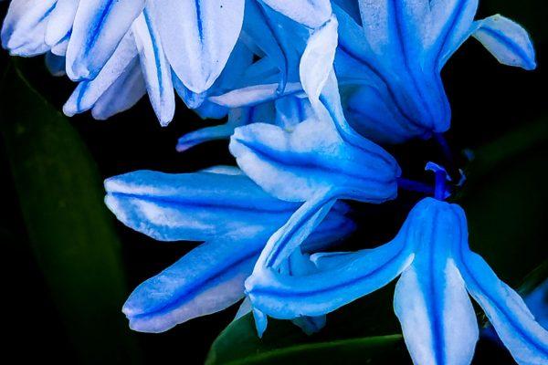 Eine kleine Orgie in Bleu zum Osterfest