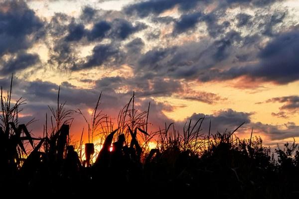Sundown Chronicles 20_8_21: Cloudy Sky