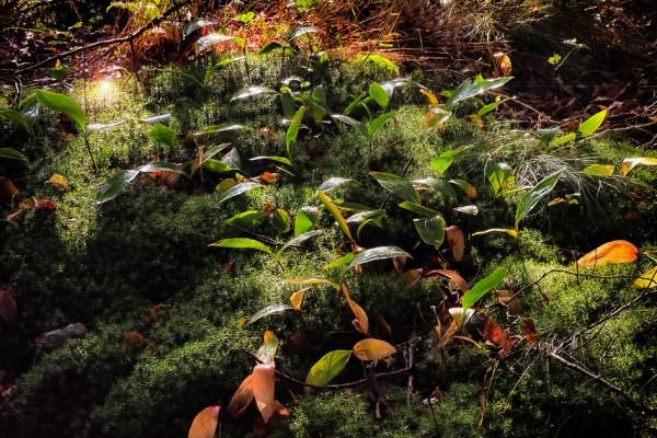 Waldboden, sonnengeküsst