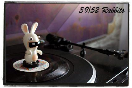 rabbit39