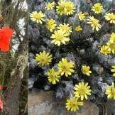 Flora del Kilimanjaro alle diverse quote