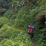 1. Ci si inoltra nella foresta, tra felci e sanguisughe (ph E. Ferri – K2014.it)