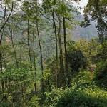 2. Il primo tesoro del Kanchenzonga (i Cinque Tesori della Grande Neve): la natura senza l'uomo; la foresta subtropicale (ph E. Ferri – K2014.it)