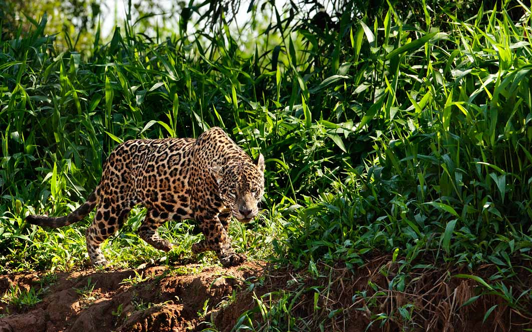 Pantanal, ph. Ivan Mazzon