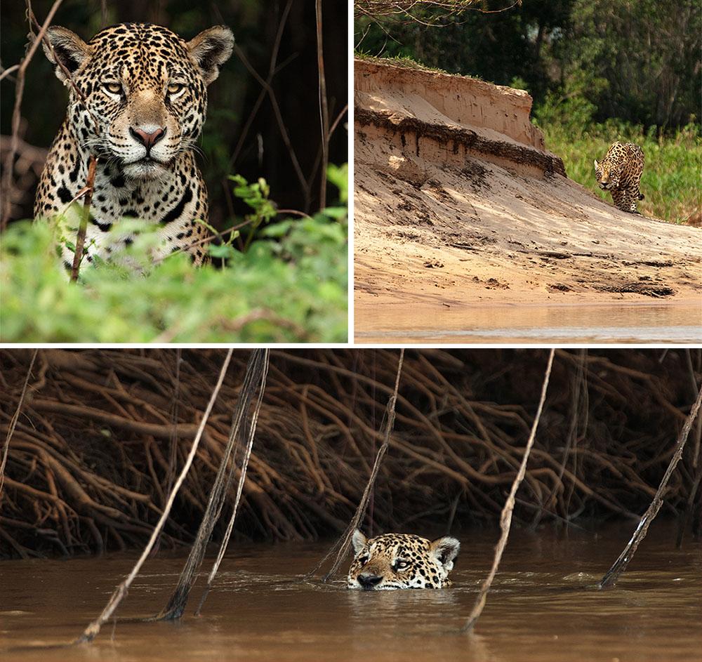 IM_Pantanal_02