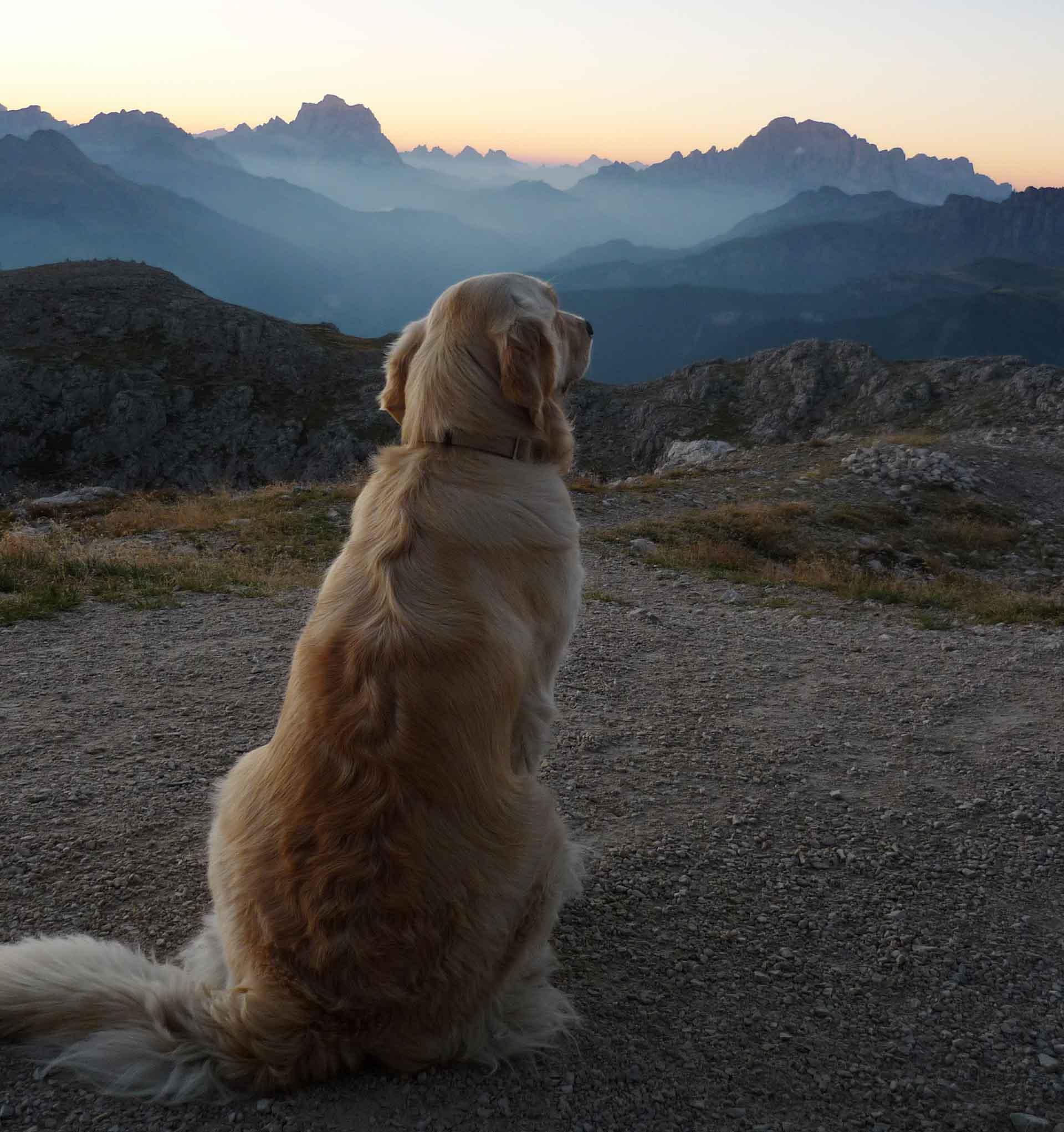 Cane padrone scruta l'orizzonte all'alba