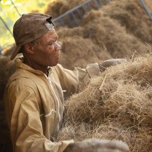 Bærekraftig produksjon - vetiver