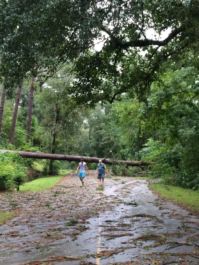Hurricane Hermine Damages