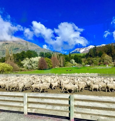 The Best Way to Visit a Sheep Station
