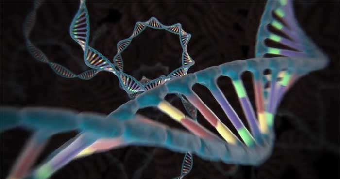 REpresentation of DNA