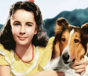 Filmy failijne - Lassie wróć