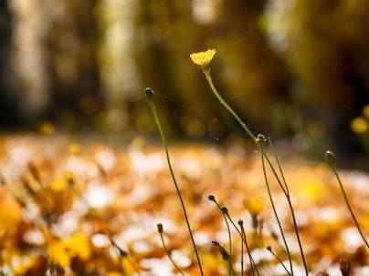 Bright Autumn--188