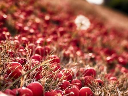Bright Autumn--40