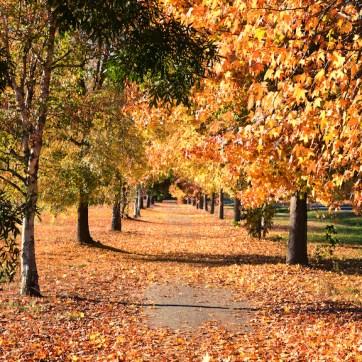 Bright Autumn--175
