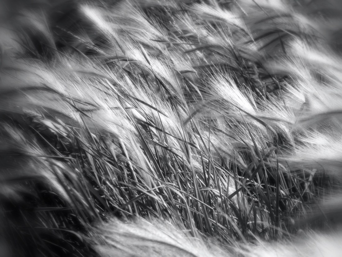 A blurry image of grass blowing in the ewind