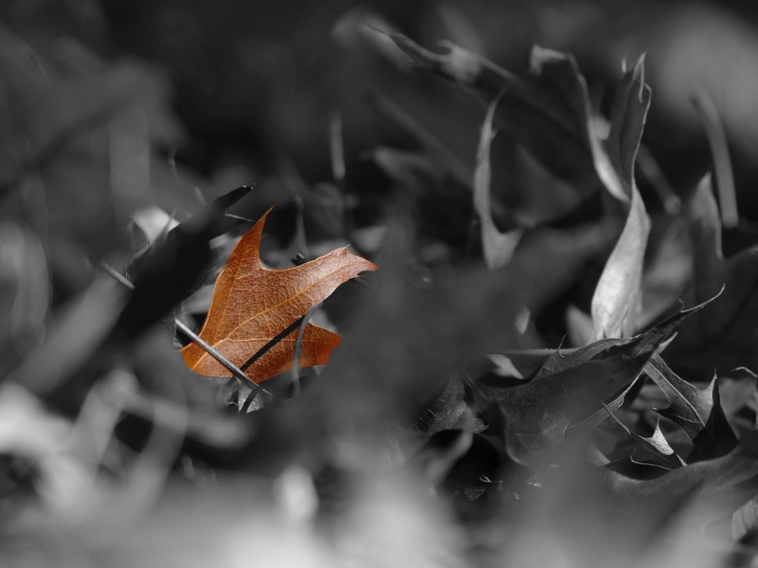 a brown coloured leaf surrounded by black and white leaves.