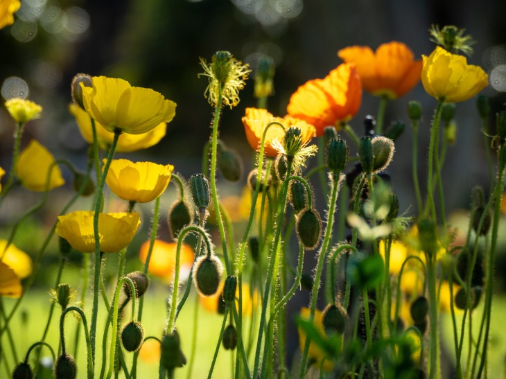 Spring in the Wollongong Botanic Gardens