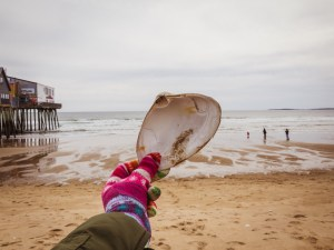 A gloved hand holds up a large pippy shell infront of a beach