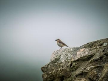 Birds on St KIlda