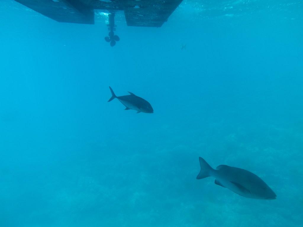 Fish swimming near a boat