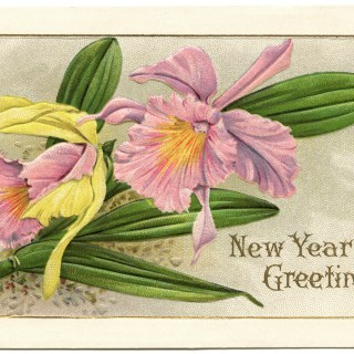 Pink Flower Stecher New Year Postcard
