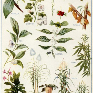 Vintage Botanical Plants F. E. Wright