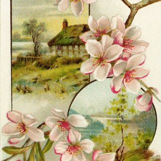 Pink Flowers Scenic Victorian Trade Card