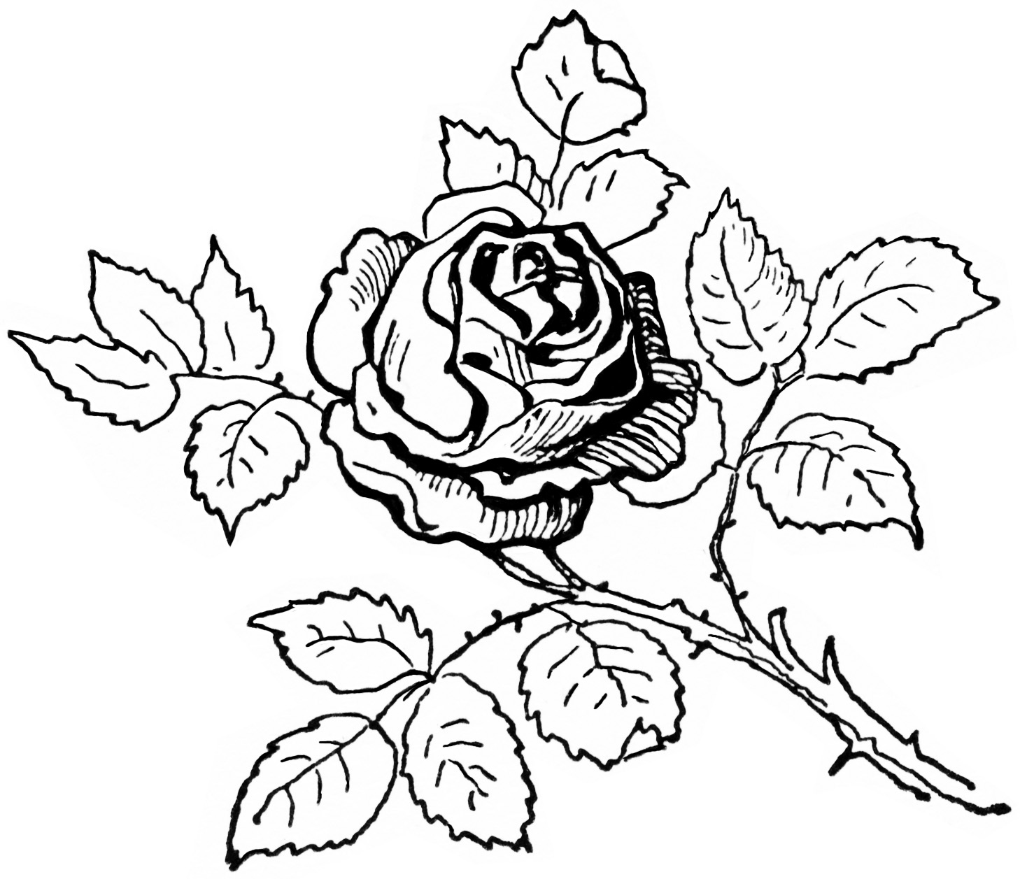 Vintage Clipart Rose