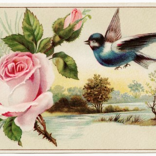 Pink Rose, Blue Bird, Scenic Victorian Card