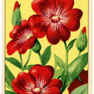 Free Vintage Image ~ Coquelourde French Seed Label