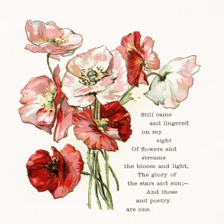 Free Vintage Image ~ Poppies and Poem