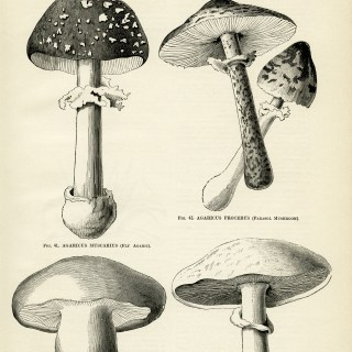 Mushrooms Page and Clip Art