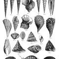 sea shells clipart, free digital collage sheet, vintage sea shell, black and white clip art, vintage sea graphic