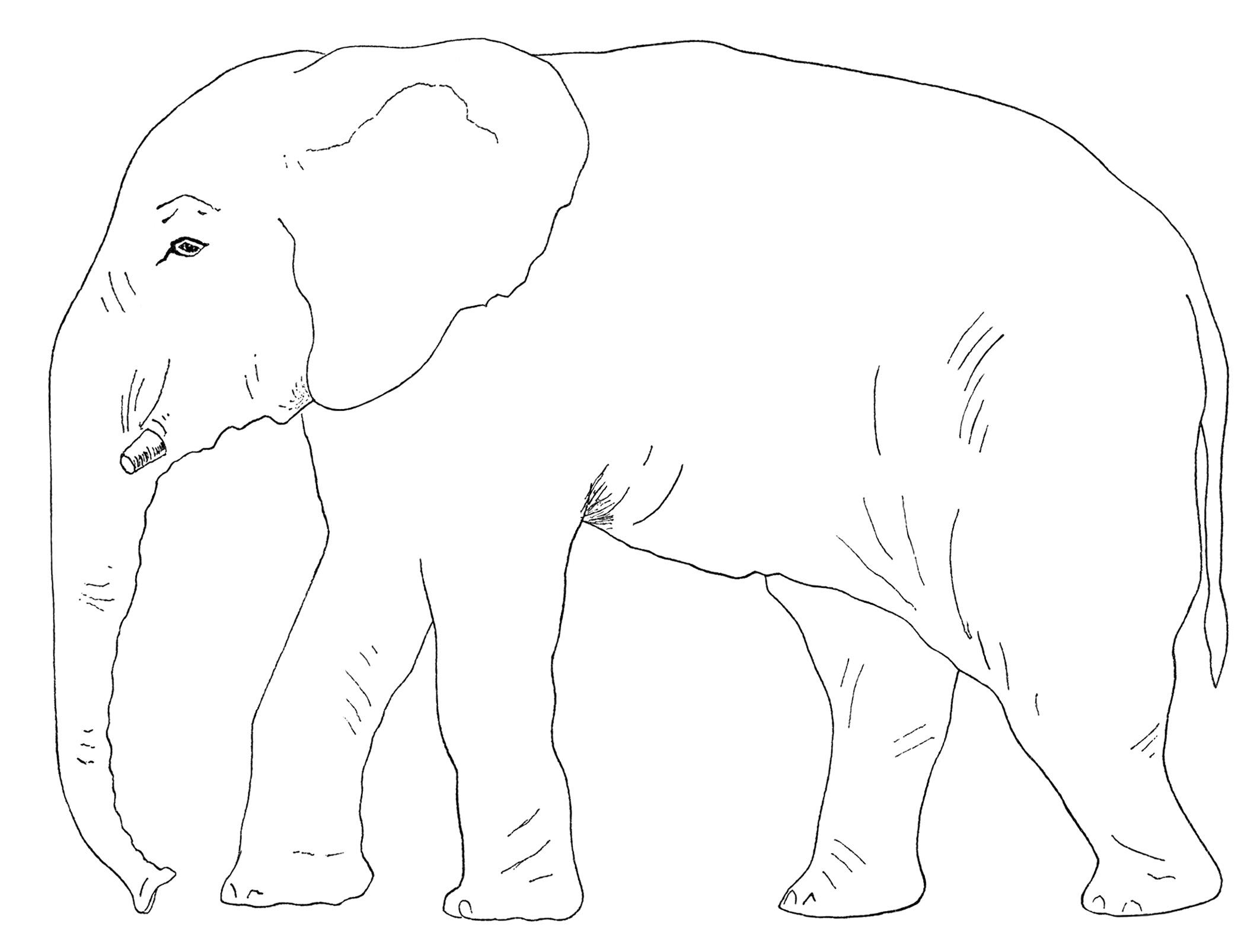 Elephants Black And White Clip Art
