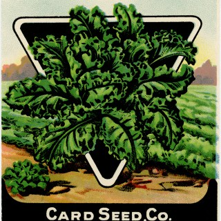 Vintage Kale Seed Packet ~ Free Digital Graphics