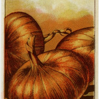 Red Onion French Seed Packet Label ~ Free Vintage Image