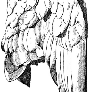 Wings Book Plate and Clip Art ~ Free Vintage Graphics