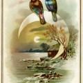 Victorian card, vintage bird clip art, winter evening scene, birds on moon illustration, old fashioned card