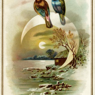 Evening Bird Scene ~ Free Vintage Image