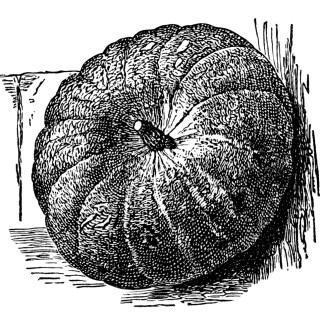 Vintage Pumpkin ~ Free Clip Art