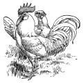 White Leghorn, black and white clip art, farm animal image, vintage chicken clipart, vintage rooster illustration