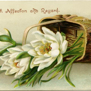 Basket of Flowers ~ Free Vintage Image