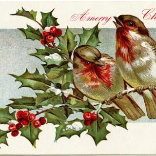 Birds Christmas Postcard ~ Free Vintage Graphic