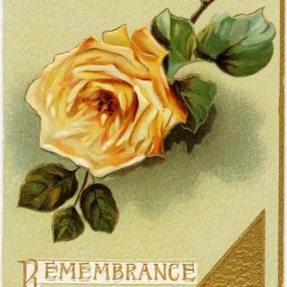 Yellow Rose Christmas Card