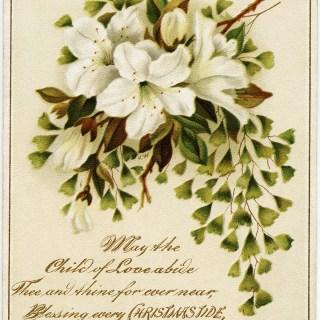 Lilies Christmas Card