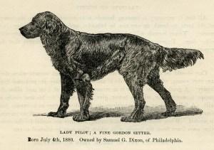 Gordon Setter illustration, black and white clip art, vintage animal clipart, dog engraving, setter dog sketch